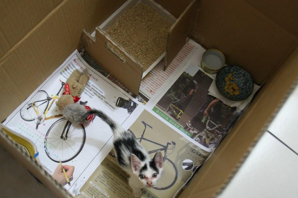 20100621-02撿到的小貓