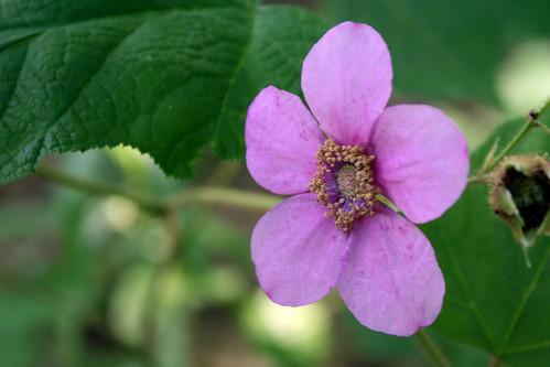 pink flower 173
