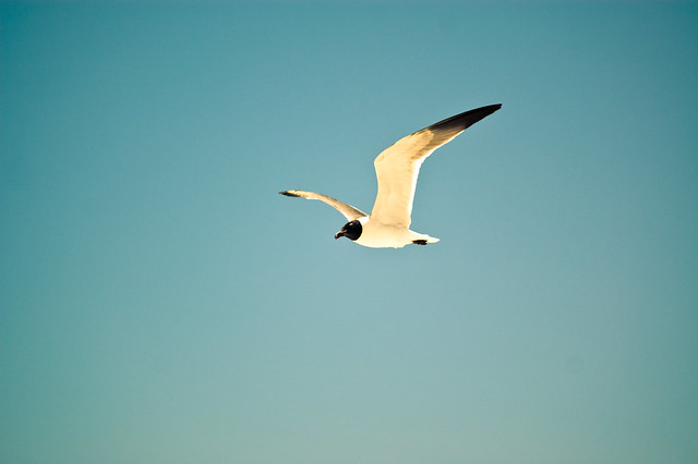 """The gull sees farthest who files highest"""