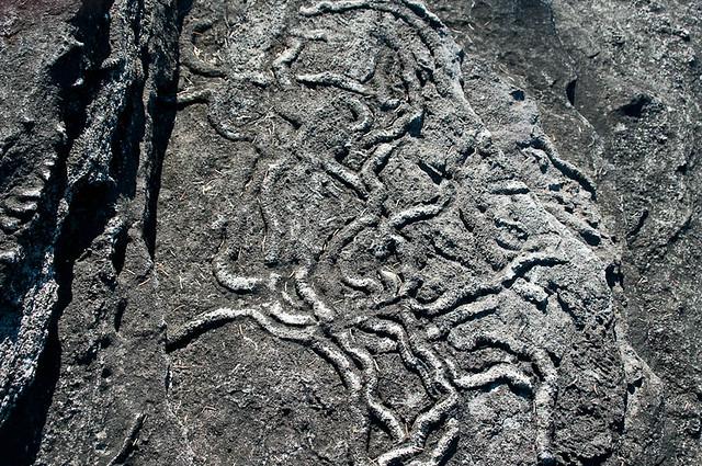 Fodinichnia Trace Fossils