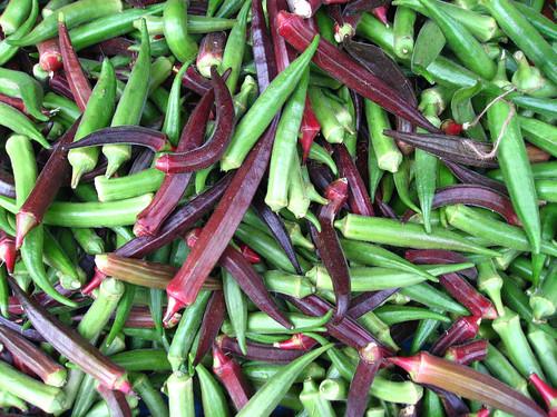 Bame - legume rare