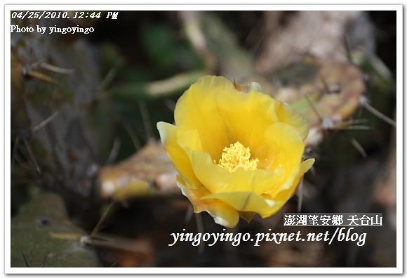澎湖之旅_望安鄉(天台山)990425_I0252