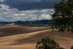 beautiful tuscany - S.Luce (Pisa) (paololivorno) Tags: light green countryside florence shadows country grain volterra ombre hills pisa campagna mais tuscany firenze growing toscana campaign maize luce colline grano tuscan coltivazione