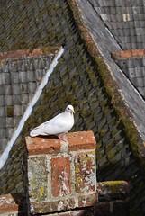 Watcher on high, Oxburgh Hall, Norfolk