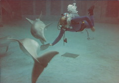 Paling around with the dolphins