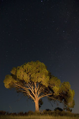 Lonely tree       [Explore #11] (Antonio Carrillo (Ancalop)) Tags: espaa tree night canon puerto arbol noche spain nightshot tokina explore murcia nocturna 1224mm explored puertolumbreras lumbreras ancalop
