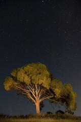 Lonely tree       [Explore #11] (Antonio Carrillo (Ancalop)) Tags: españa tree night canon puerto arbol noche spain nightshot tokina explore murcia nocturna 1224mm explored puertolumbreras lumbreras ancalop