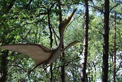 Dinopark Amersfoort (OurPhotoWork) Tags: travel holland netherlands zoo dino dinosaur tiger nederland explore nl tijger trex amersfoort dinosaurus dierentuin dierenpark dinopark ourphotowork amersfoortdinopark