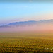 Dawn Field Photo 5