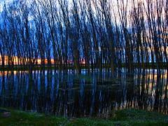 Transparencia (Jesus_l) Tags: espaa atardecer agua europa provincia reflexions reflejos palencia jesusl