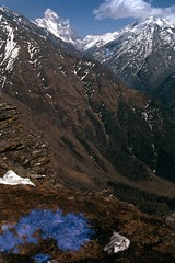 Nanda Devi from the Malatuni Ridge (bhatto) Tags: himalaya lata nandadevi uttarkhand nandadevisanctuary latakharak
