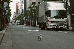 across road (H2@Japan) Tags: japan cat tokyo nikon kitty 日本 東京 猫 straycat 野良猫