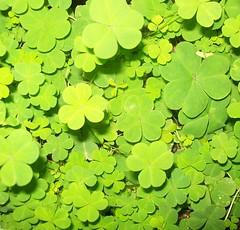 y hasta luego (cièlo) Tags: verde flash fluor suerte treboles