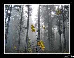 brume dans la foret de myon (francky25) Tags: de la foret hdr dans brume doubs comté franche myon passiondéclic