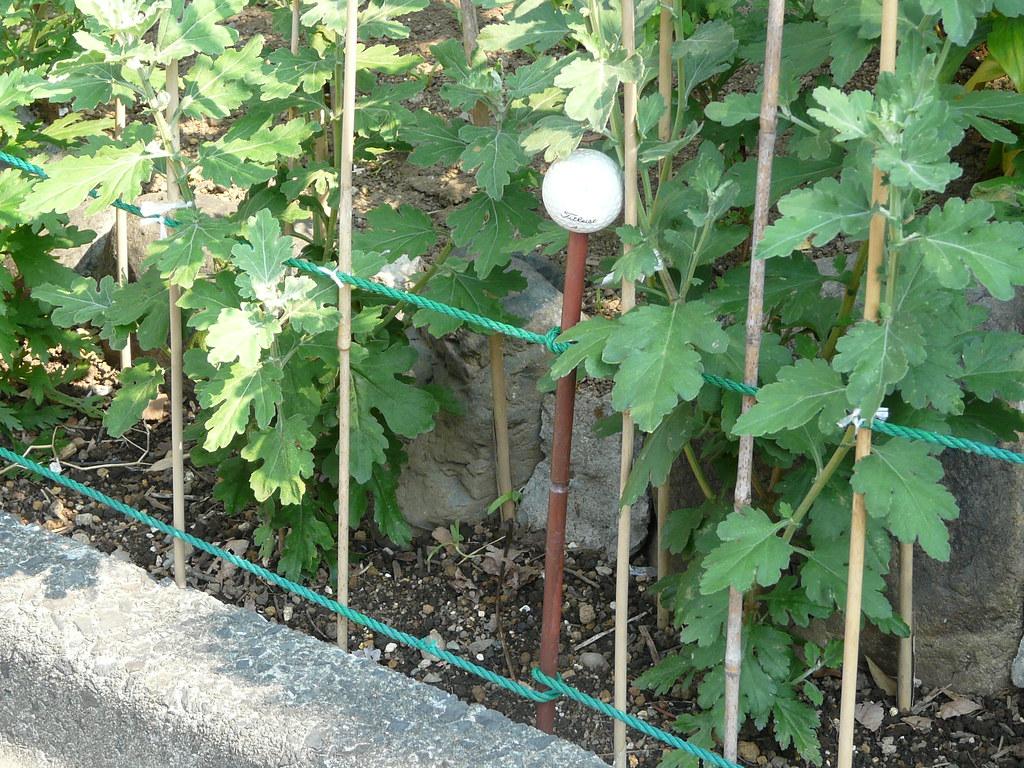 Golfer's Fence