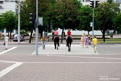 По зебре || Zebra Crossing (Alexander Kuznetsov) Tags: road street city horses crossing pavement pedestrian zebra daytime belarus crosswalk minsk дорога город carriageway минск зебра d90 тротуар улица беларусь oudoors кони переход лошади nikond90 пешеходныйпереход пешеходы afs50mmf14g проезжаячасть