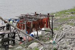 camp fish alaska river yukon tanana