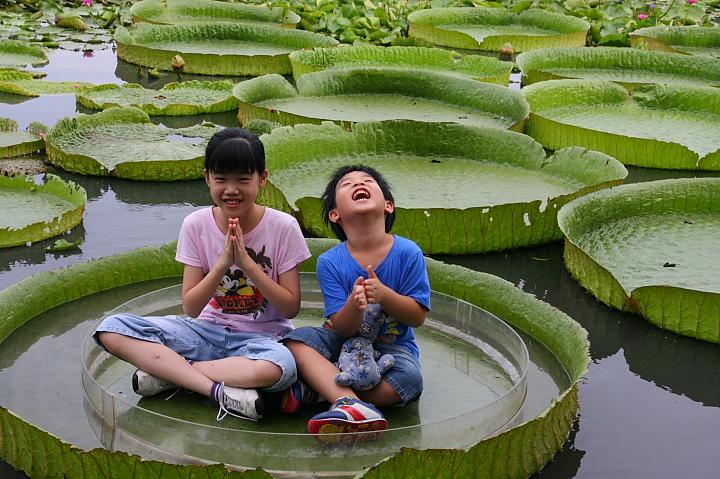 台南白河蓮花公園(水連公園)0047