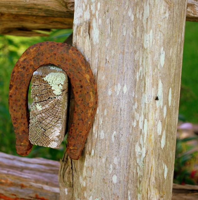 Watsons Farm horsehoe