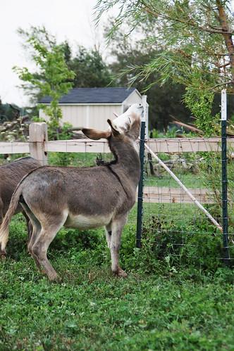 01_donkey_hop