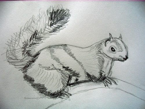Squirrel, pencil sketch Ulla Hennig