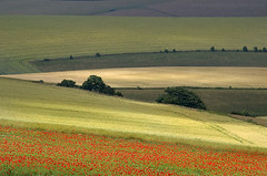 Fields of Summer (Yaroslav Staniec) Tags: uk trees summer england colour walking landscape countryside britain hills poppies eastsussex southdowns poppiesfield landscapepictures yaroslavstaniec