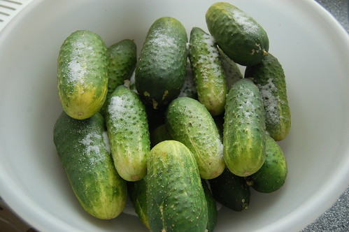 gherkins Aug 10