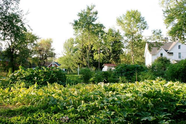 August Garden III