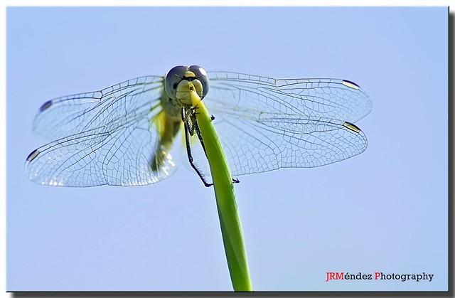 Tiempo de libélulas