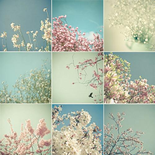 Print Set - Flowers