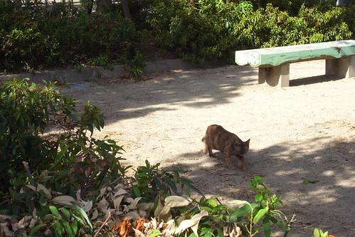 Today's Cat@2010-08-08