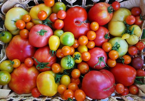 August Tomato Harvest 2