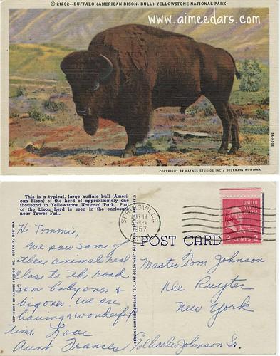 Buffalo - Linen (1957)
