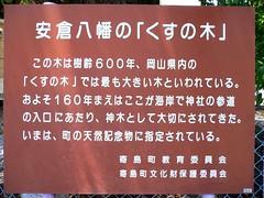 安倉八幡のくすの木(看板)