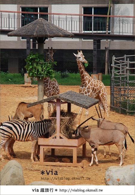 【新竹住宿】來去和動物住一晚~關西六福莊生態渡假旅館11