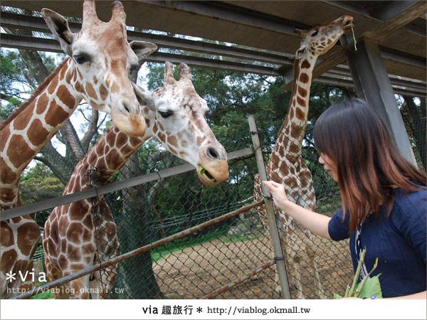 【關西六福莊】精彩秘探野生動物園/DIY手作/農趣樂~!39