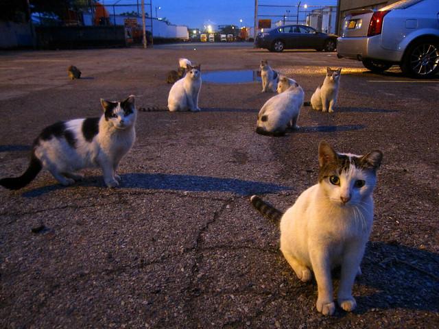 Kitty Empire 4