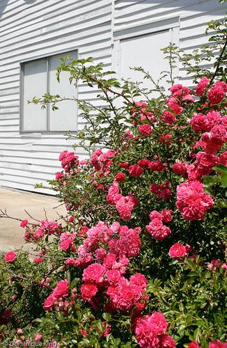Port Oneida Summer 2010-8