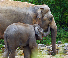 Mother and child (Greet N.) Tags: zoo sony elephants olifanten naturesfinest dierenparkemmen mywinners