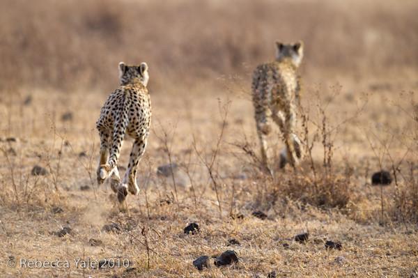 RYALE_Ngorongoro_Crater_49