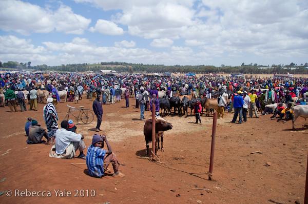 RYALE_Ngorongoro_Crater_138