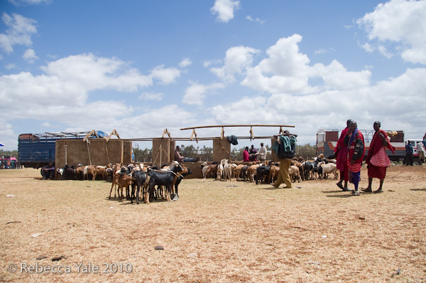 RYALE_Ngorongoro_Crater_145