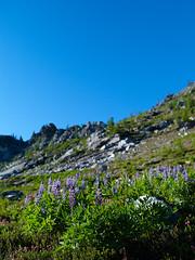 meadows2