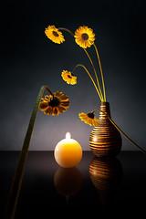Instinctive Attraction (Christophe Kiciak) Tags: flower dark fire warm candle burn sunflower vase temperature conceptual crawling contrejour attraction personnification personification