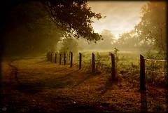 A la campagne...  il faut avouer que la lumière était magnifique ce matin! (kate053) Tags: soleil lumière champs promenade terre chemin mayenne chemindecampagne saariysqualitypictures updatecollection magiayfotografia passiondéclic passionultimate masterclasselite