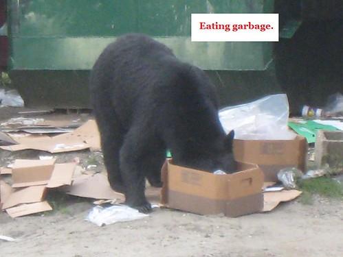 bear chat 6