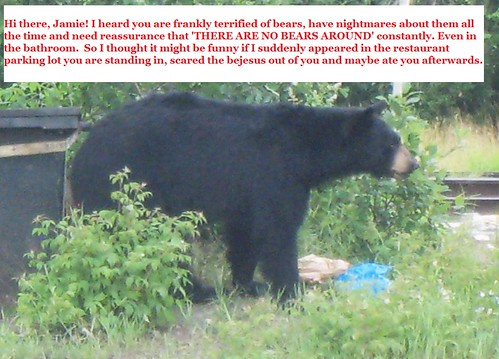 bear chat 1