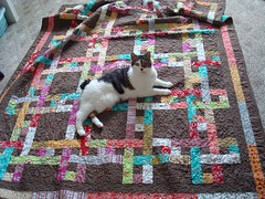 Iris on Nick and Katie quilt