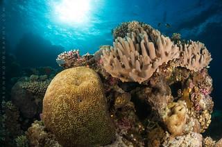 Coral Sunshine - Mount Mutiny, Fiji