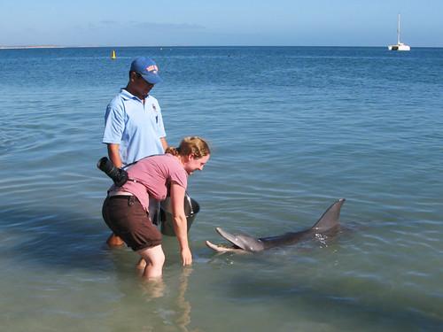 Feeding a Dolphin 1